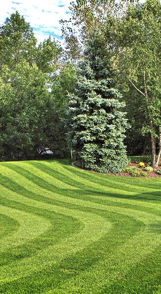 home-lawn